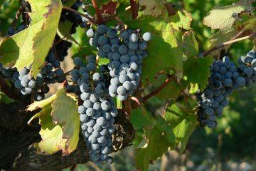 Lambrusco vino rosso abbinamenti caratteristiche prezzo